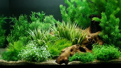 Kies Und Dekorationsgegenstände In Ihrem Aquarium Fluval Deutschland