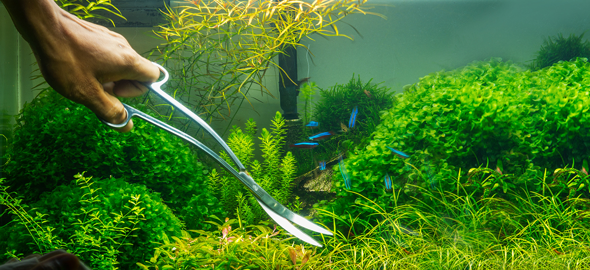 Fluval AQUASCAPING tips 101